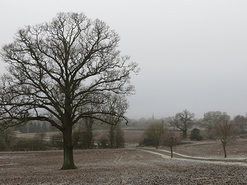 Frosty scene in Wichenford