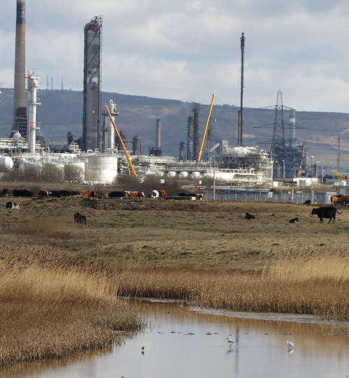 Heavy industry on Tees-side, with avocets skimming the water in the foreground.