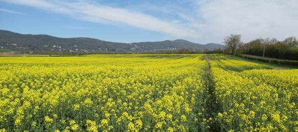 Malvern Hills from near Welland