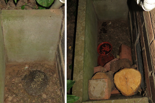 The hedgehog trapped in the hole by the front door - and the ladder structure by which it escaped