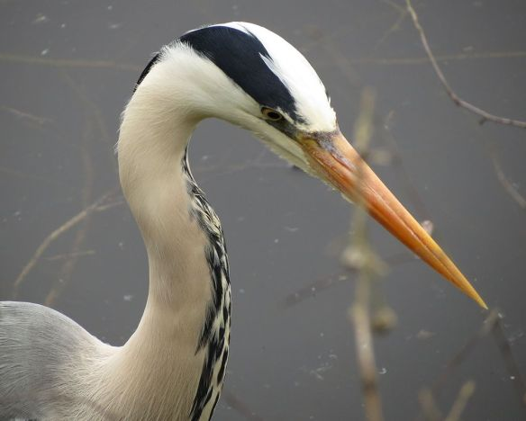 Not sure I'd want to get too close to that beak...