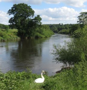River Severn at the confluence of the Borle Brook.