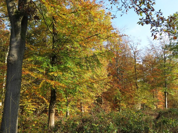 Autumn colours in Monkwood