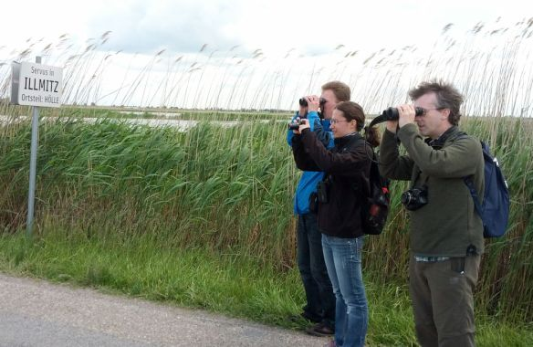 Jonas, Isabella and Rich looking intently at a bird - possibly the red-backed shrike we saw
